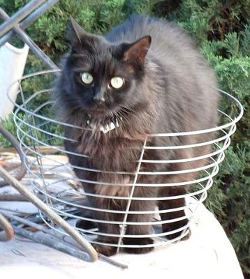 Basket Case!