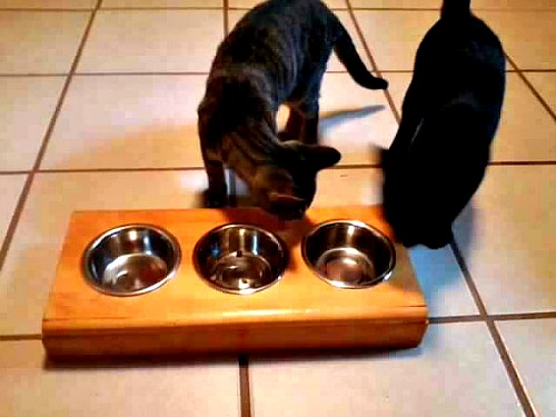 Pet bowl holder with stainless steel bowls
