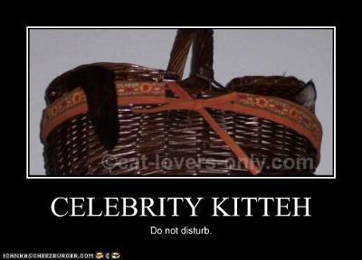 Celebrity Kitteh
