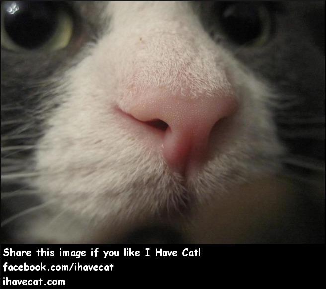 Petie - I Have Cat