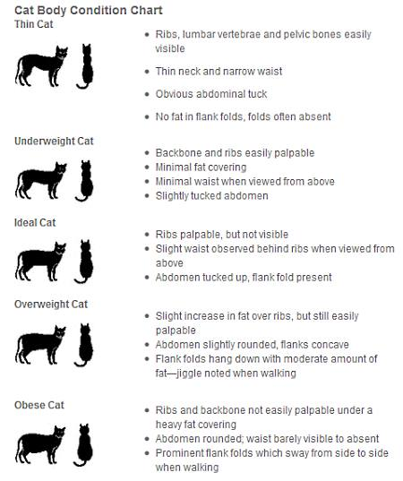Cat Food Chart By Age