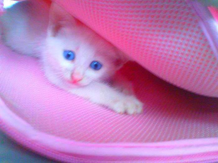 Ikong kitten playing hide and seek