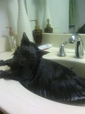Ilse taking her fist bath...