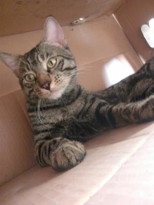 Indie sitting in his favorite box!