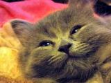 Featured Kitties July, 2013 Part 2