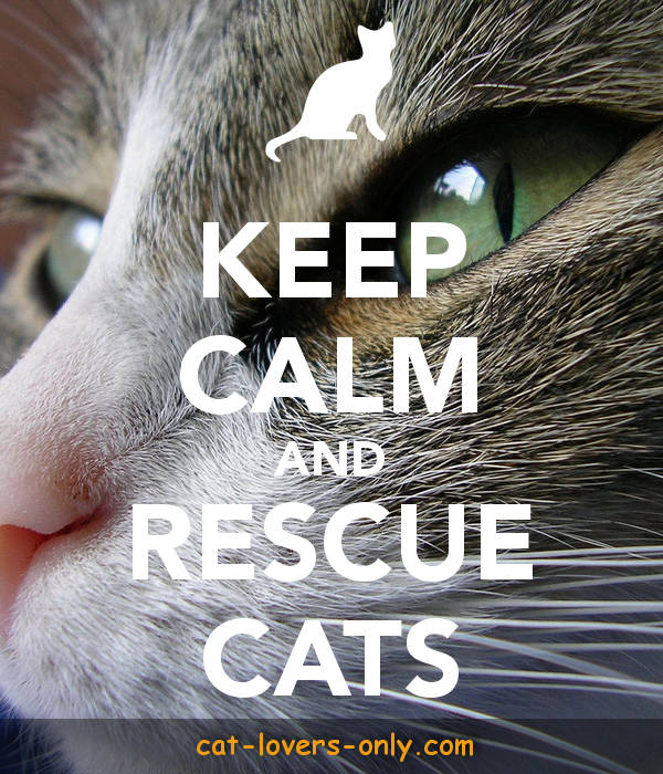 Keep calm and rescue cats.