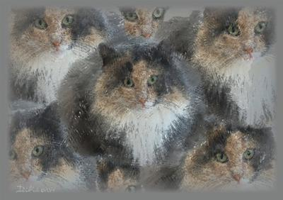 Kaleidocats