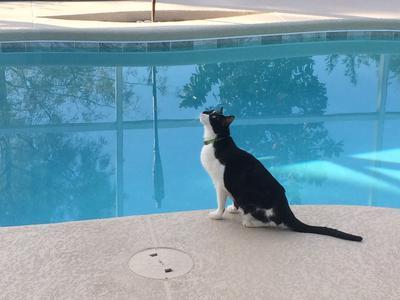 Curious Kieko goes for a swim.