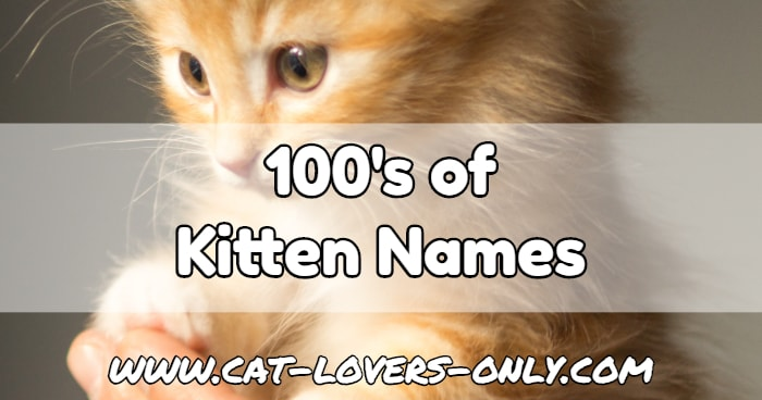 Orange kitten with text overlay 100's of Kitten Names