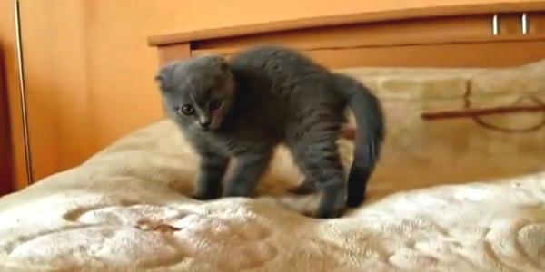 Kitten versus scary thing