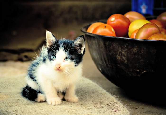 Kitten with tomatoes