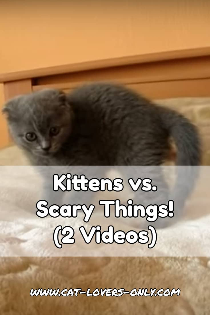 Gray kitten with text overlay Kittens vs Scary Things