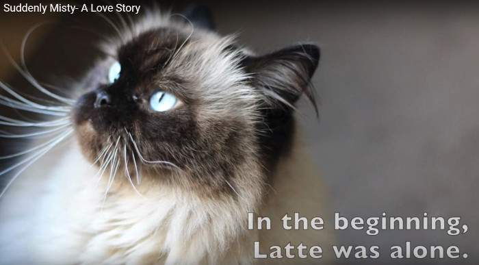 Latte the Himalayan