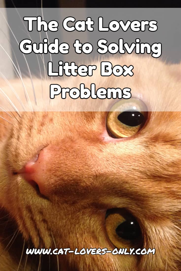 Jazzy the cat with text overlay The Cat Lovers Guide to Litter Box Problems