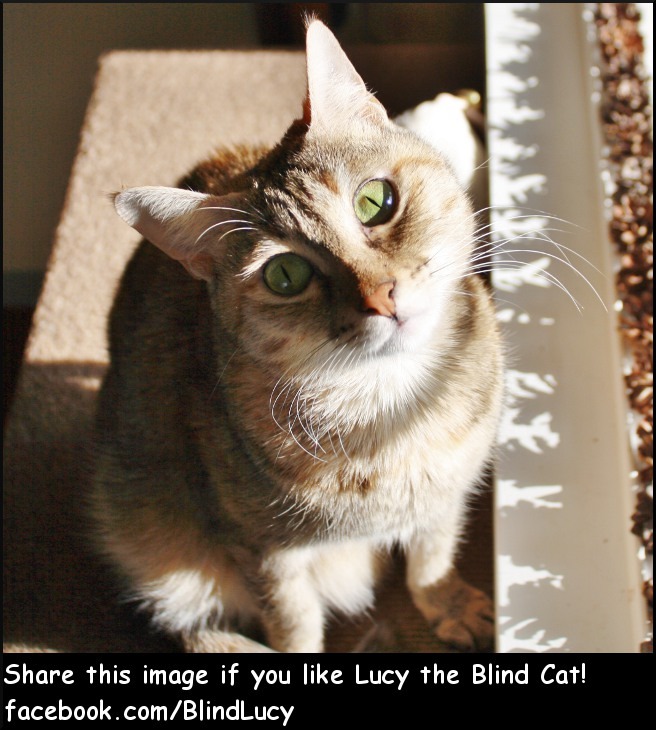 Lucy the Blind Cat