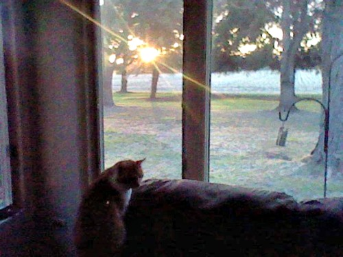 Lulu watching the sunrise