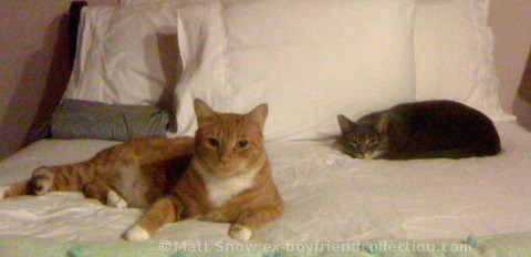 Matt Snow's Cats Bigby and Oliver