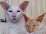 Featured Kitties May, 2013 Part 2