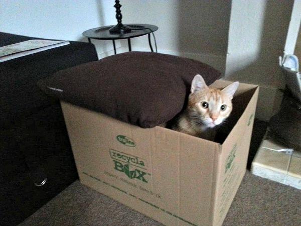 Maya in the box