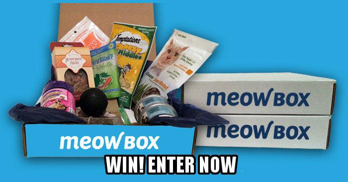 Enter Meow Box contest