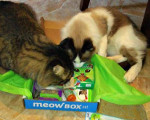Meow Box investigators