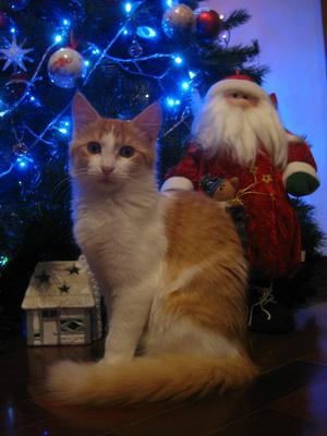 Another Christmas pose, Melody likes to have her picture taken.