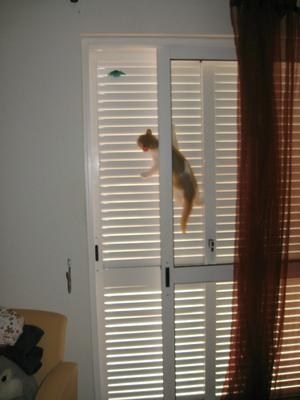 Spider-cat in training - She loves doing this :)