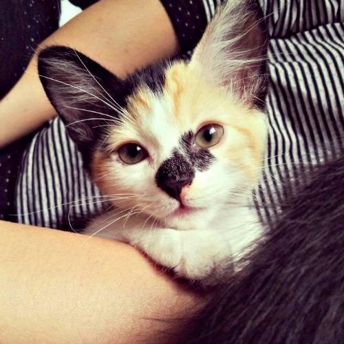 Milk the kitten