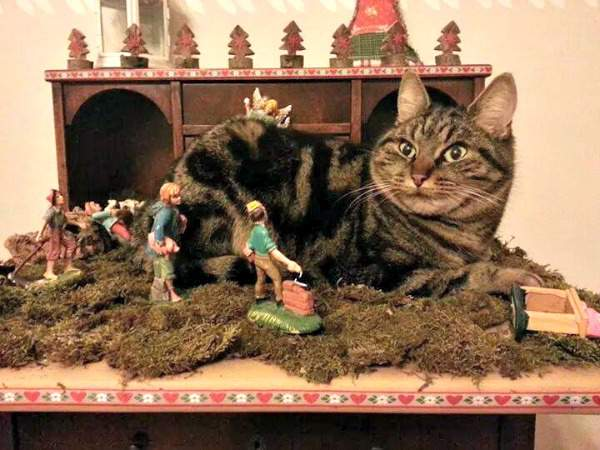 Minnie the tabby in the nativity scene