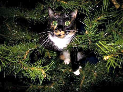 Miss Aurora in the Christmas tree