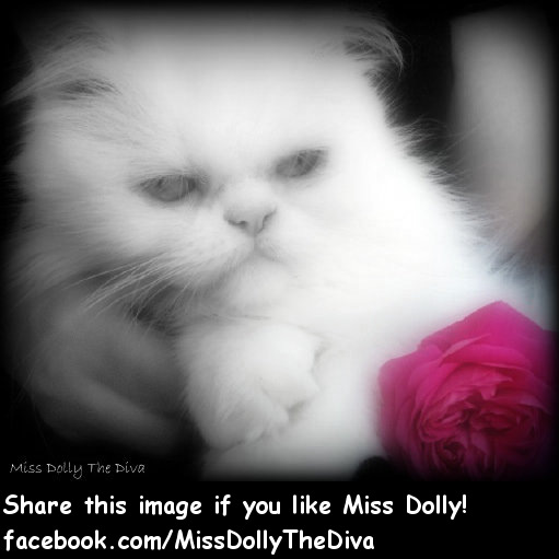 Miss Dolly the Diva