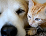 Murkin the dog and foster kitten