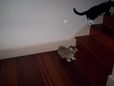 Angel and Tessa playing! : )