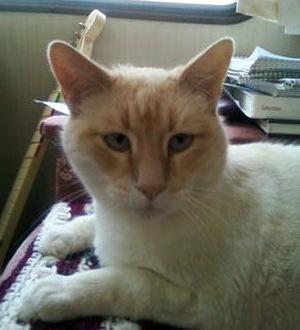 My cat Ludo