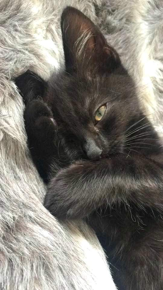 Nala kitten