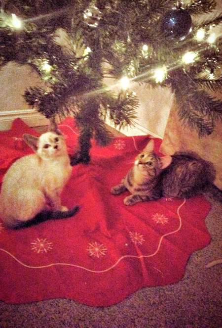 Nala and Lola at the tree