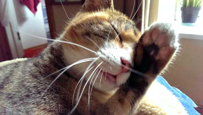 Cat wants no drama