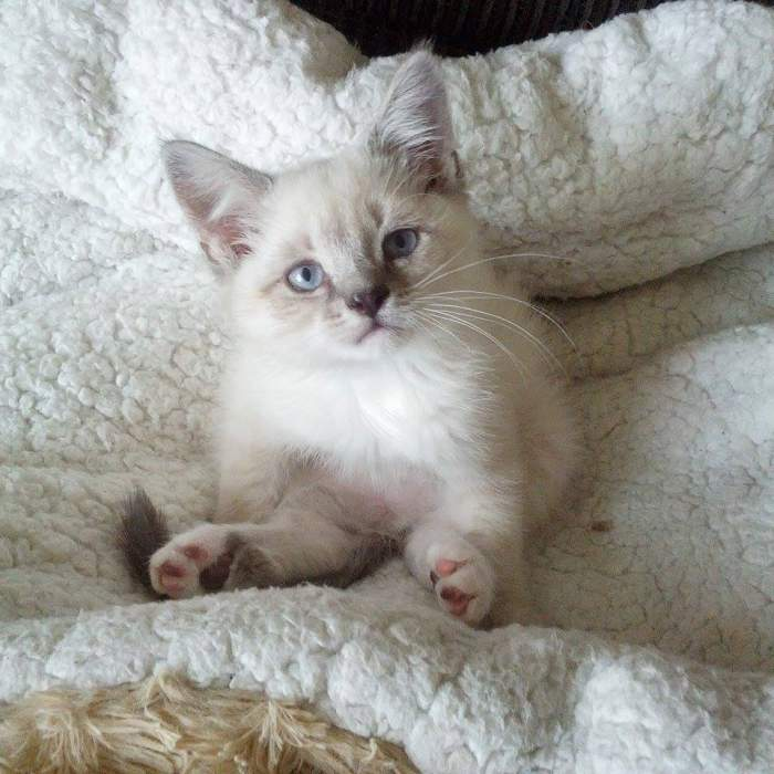 Odin the kitten