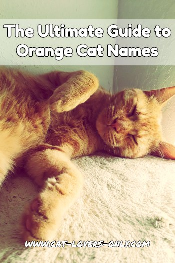 Jazzy the ginger cat with text The Ultimate Guide to Orange Cat Names