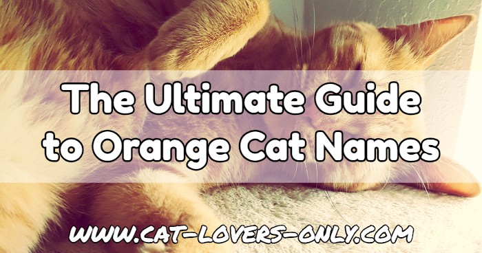 Jazzy the ginger cat with text