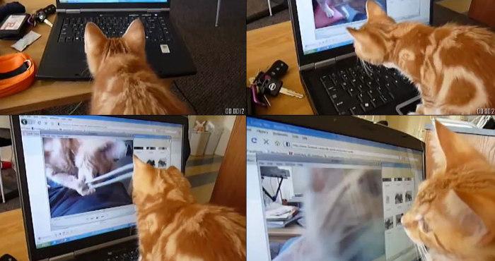 Orange tabby stalking himself on video