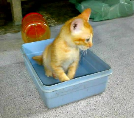 Orange tabby kitten in a plastic box
