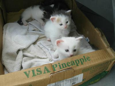 The other kittens, although one isn't in the photo