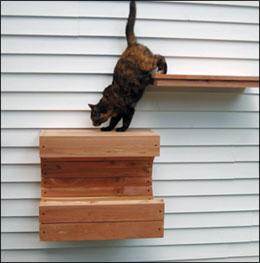 Cedar Outdoor Cat Wall Climbing System