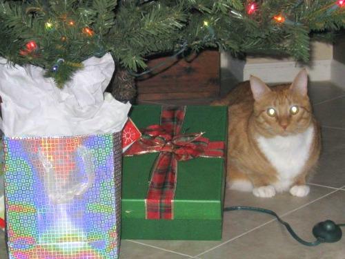 PeiWei under the tree