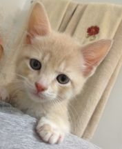 Timmy, 8 weeks old.........so sweet!
