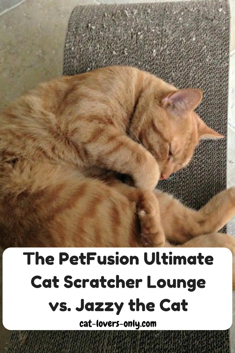 The PetFusion Ultimate Cat Scratcher Lounge vs. Jazzy the Cat