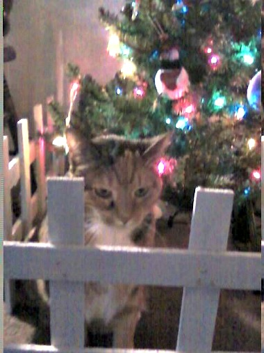 Pixie near the Christmas tree