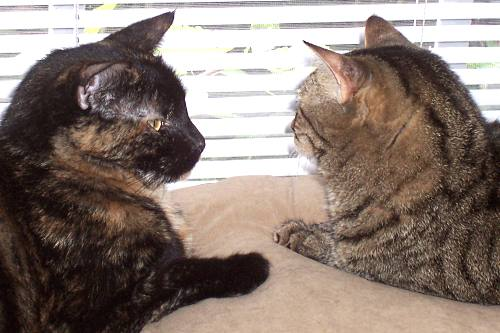 Priscilla and Teddie cat by the Window