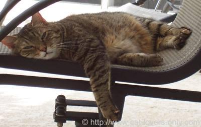 Pic of Priscilla cat on patio chair